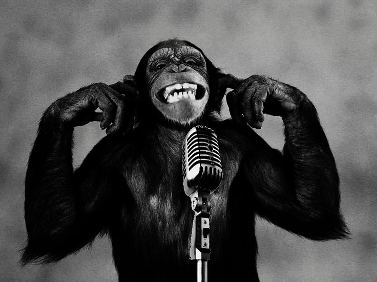 A laughing monkey behind a microphone.
