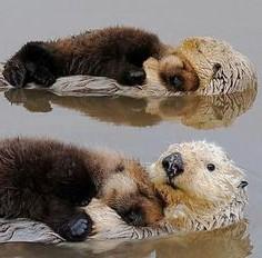 Valve swimming otters.
