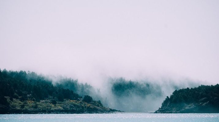 A foggy forest on the shores of a shimmering lake.